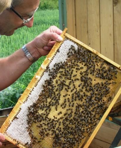 Bitės. Aviliy priežiūra