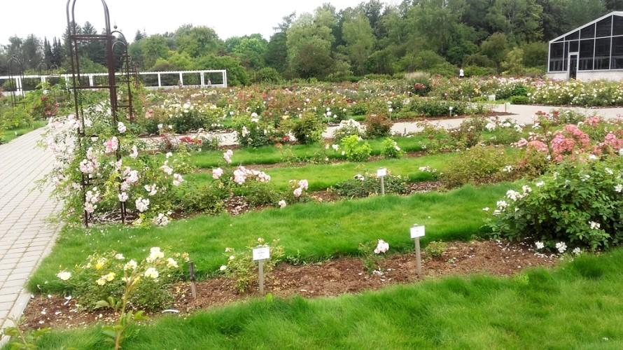 Botanikos sodas - rožės 2