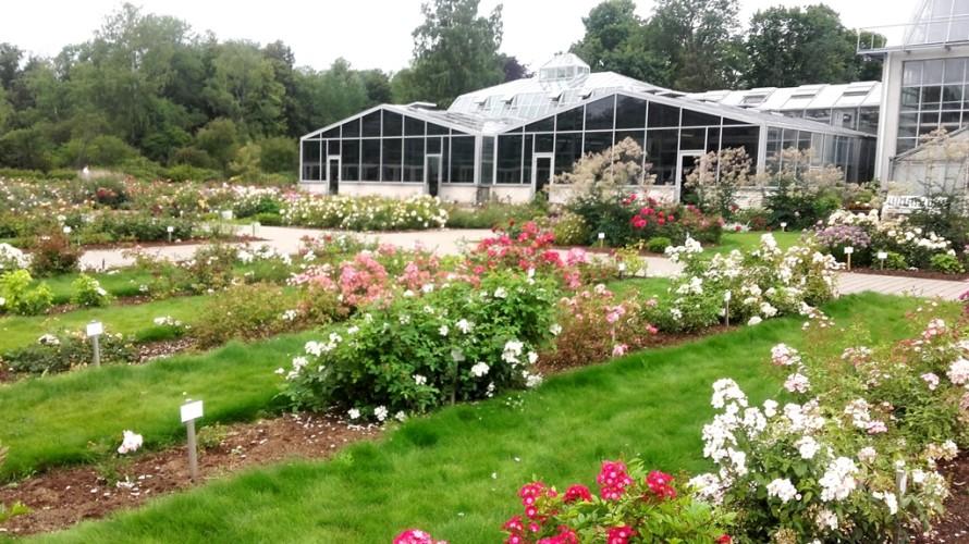 Botanikos sodas - rožės