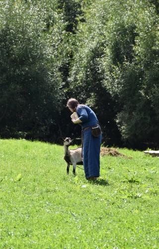 Ožkytės Vikingų kaime mėgsta būti glostomos