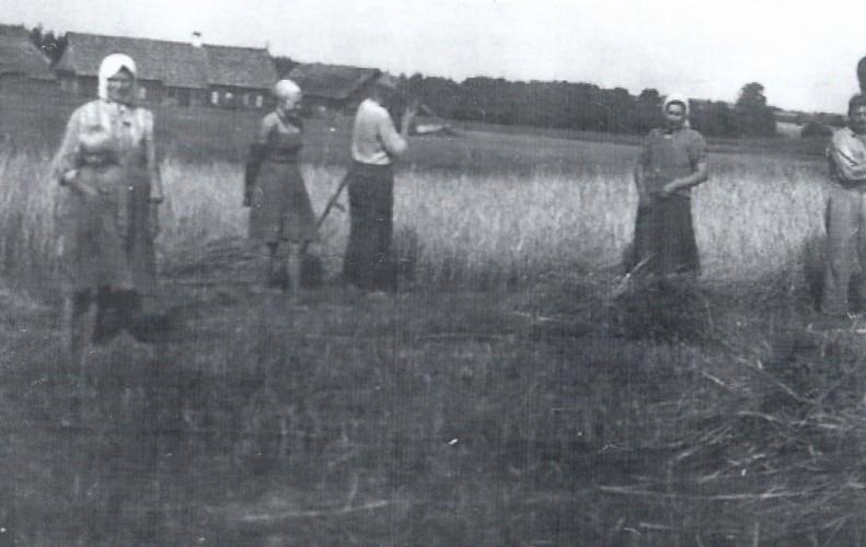 Rugiapjūtė Kriaunų kaime apie 1950 m.