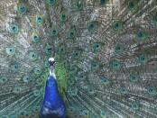 Asociatyvi nuotrauka. Šaltinis: www.zinoti.lt