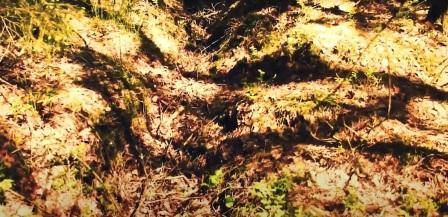 Apkasai Skėterių miške